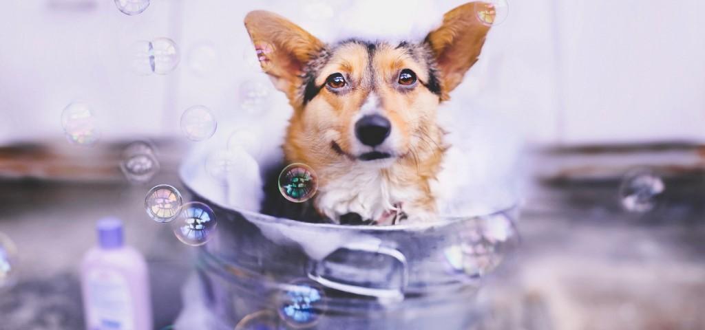 banho-em-cachorros-1